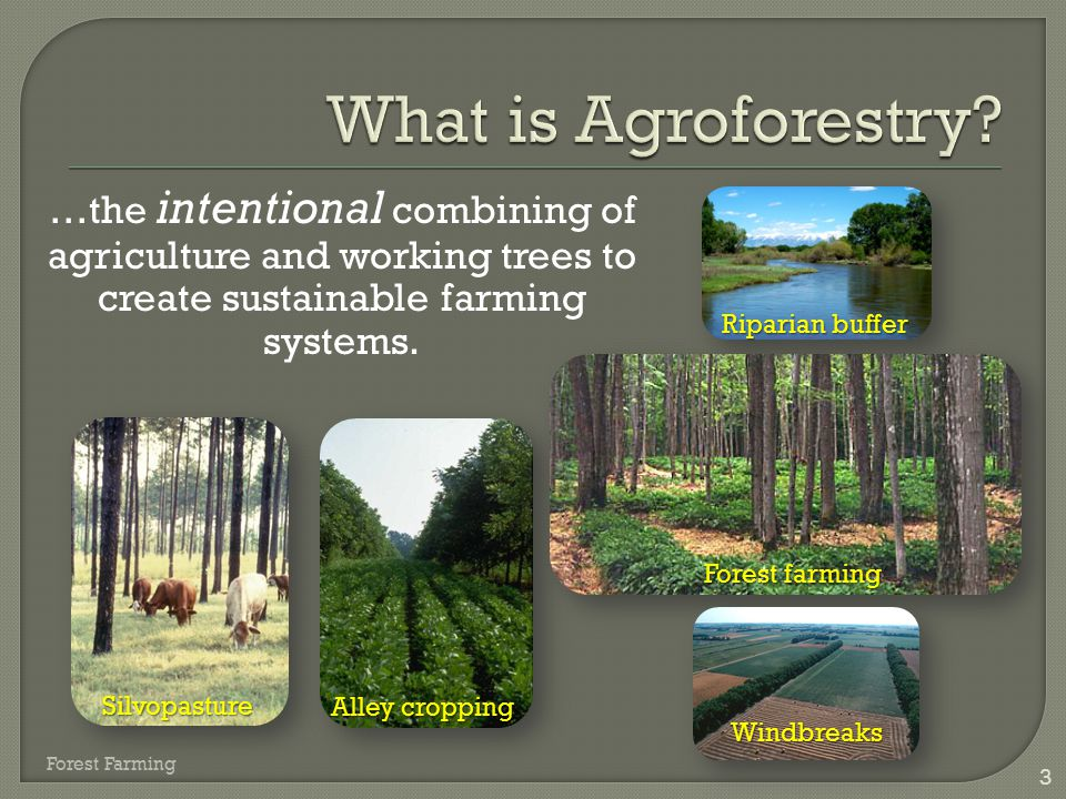 What is Agroforestry …the intentional combining of agriculture and working trees to create sustainable farming systems.