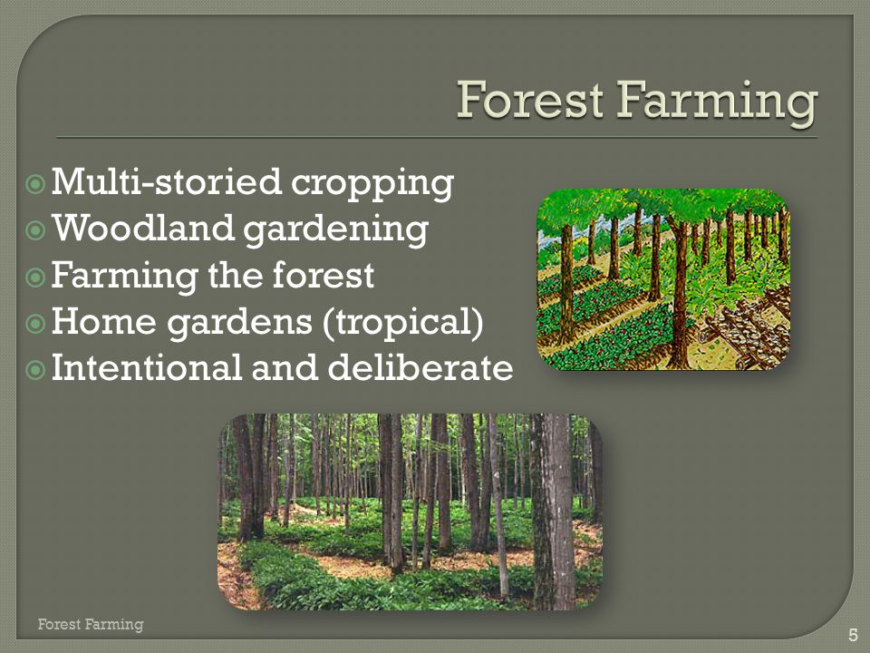 Forest Farming Multi-storied cropping Woodland gardening