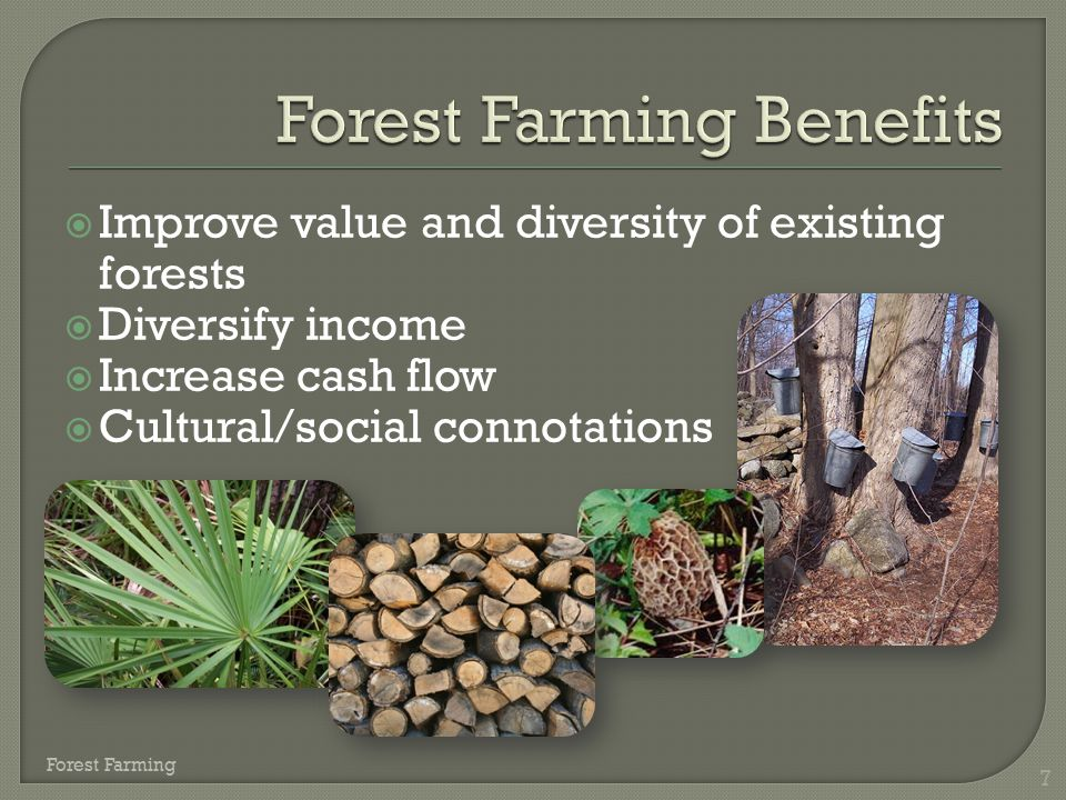 Forest Farming Benefits