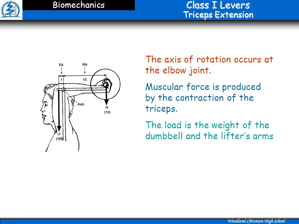 Class I Levers Triceps Extension
