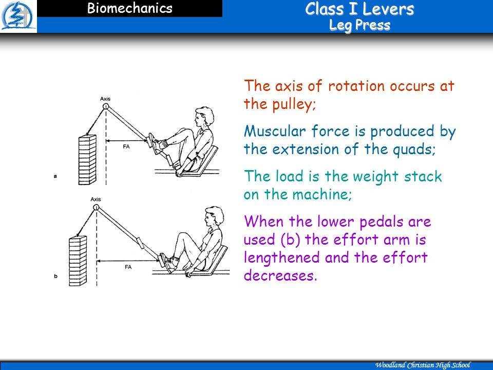 Class I Levers Leg Press