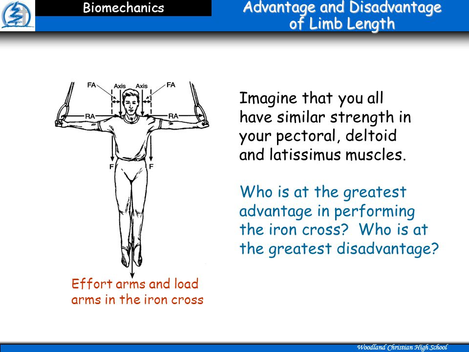 Advantage and Disadvantage of Limb Length
