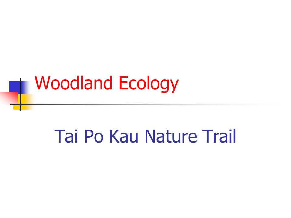 Woodland Ecology Tai Po Kau Nature Trail