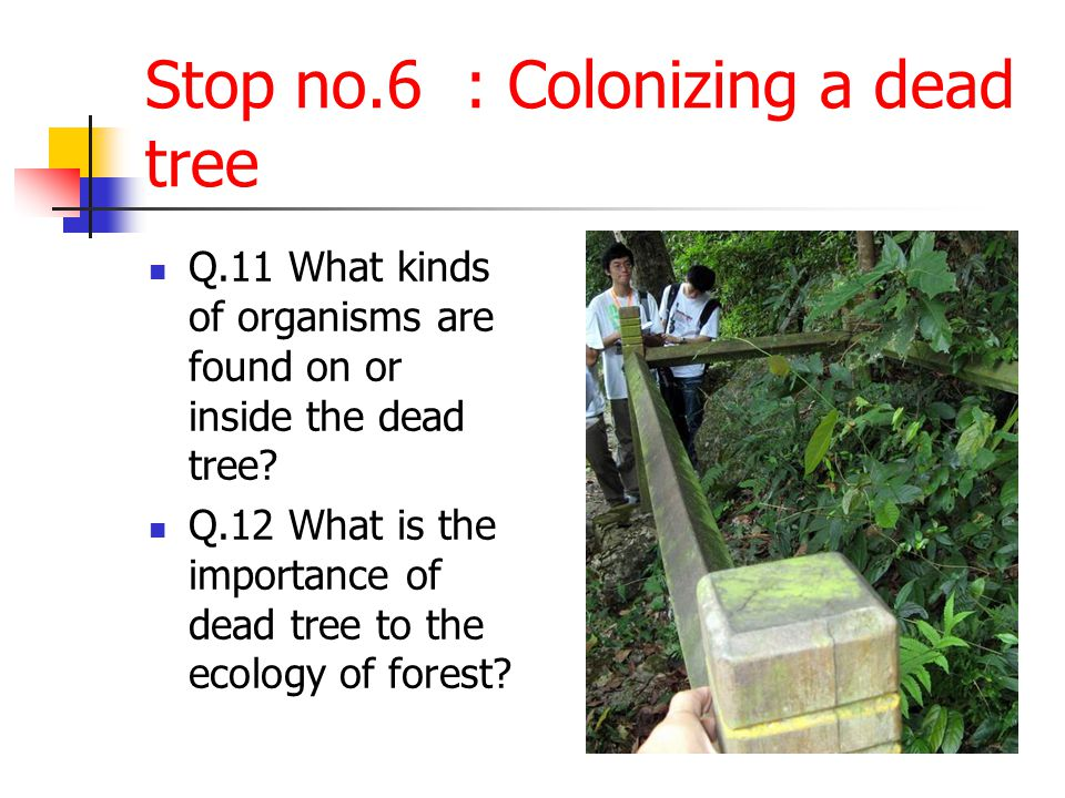 Stop no.6 : Colonizing a dead tree