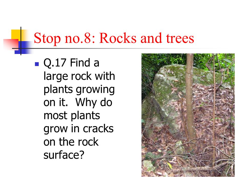 Stop no.8: Rocks and trees