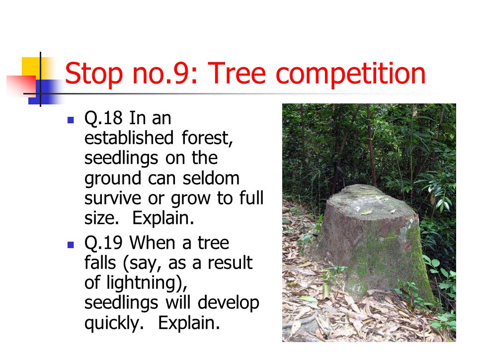 Stop no.9: Tree competition