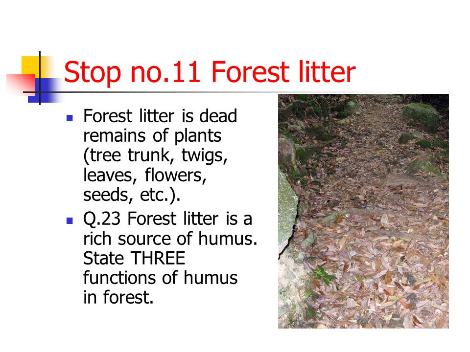 Stop no.11 Forest litter Forest litter is dead remains of plants (tree trunk, twigs, leaves, flowers, seeds, etc.).