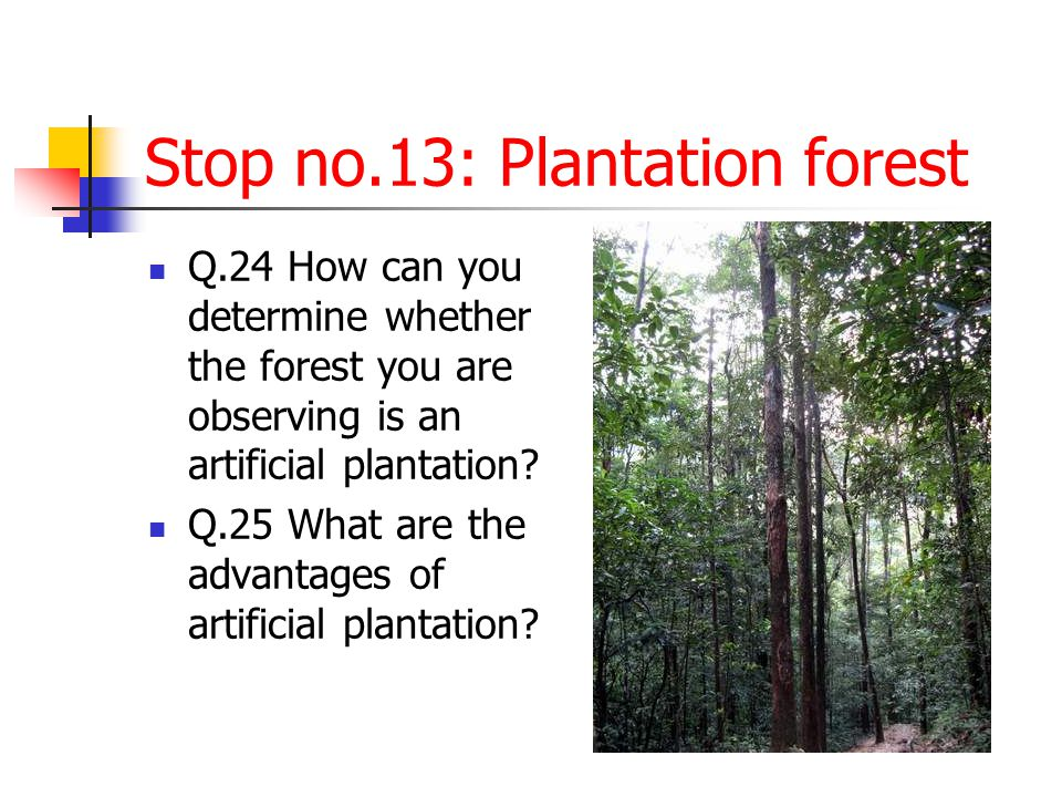Stop no.13: Plantation forest