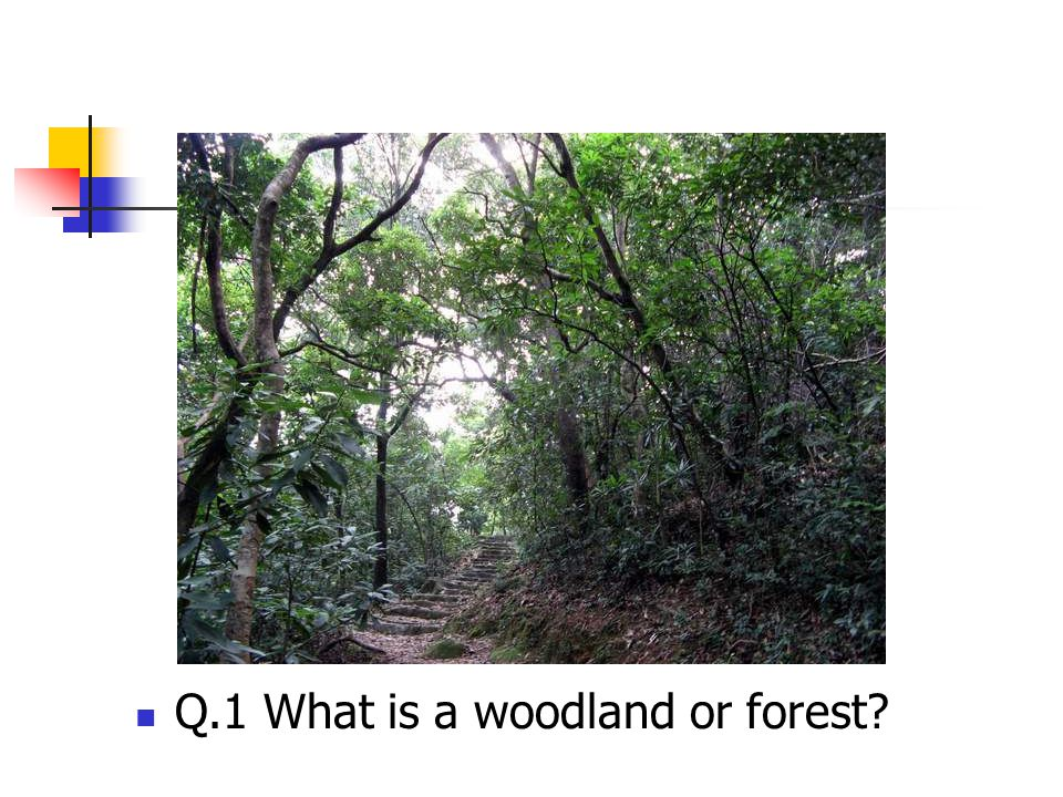 Q.1 What is a woodland or forest