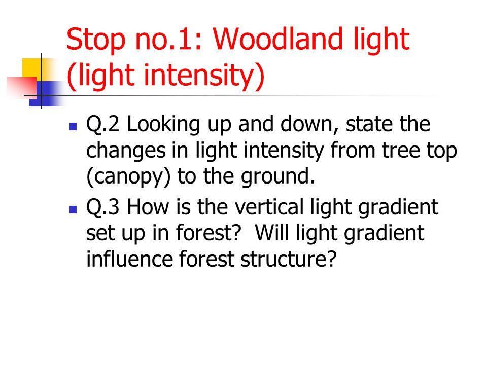 Stop no.1: Woodland light (light intensity)