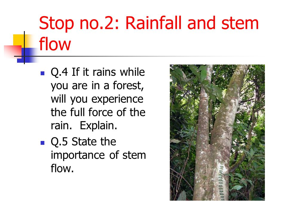 Stop no.2: Rainfall and stem flow
