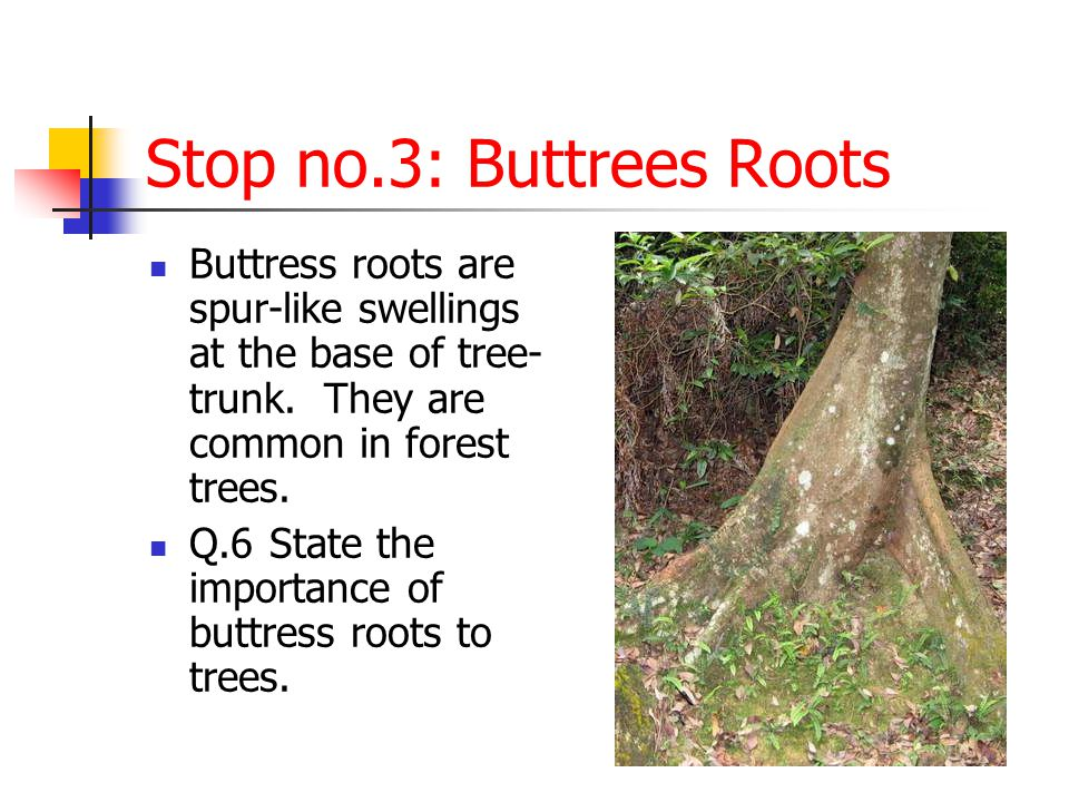 Stop no.3: Buttrees Roots