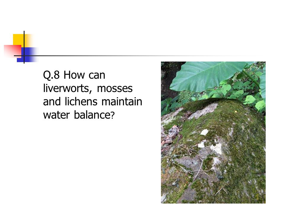 Q.8 How can liverworts, mosses and lichens maintain water balance