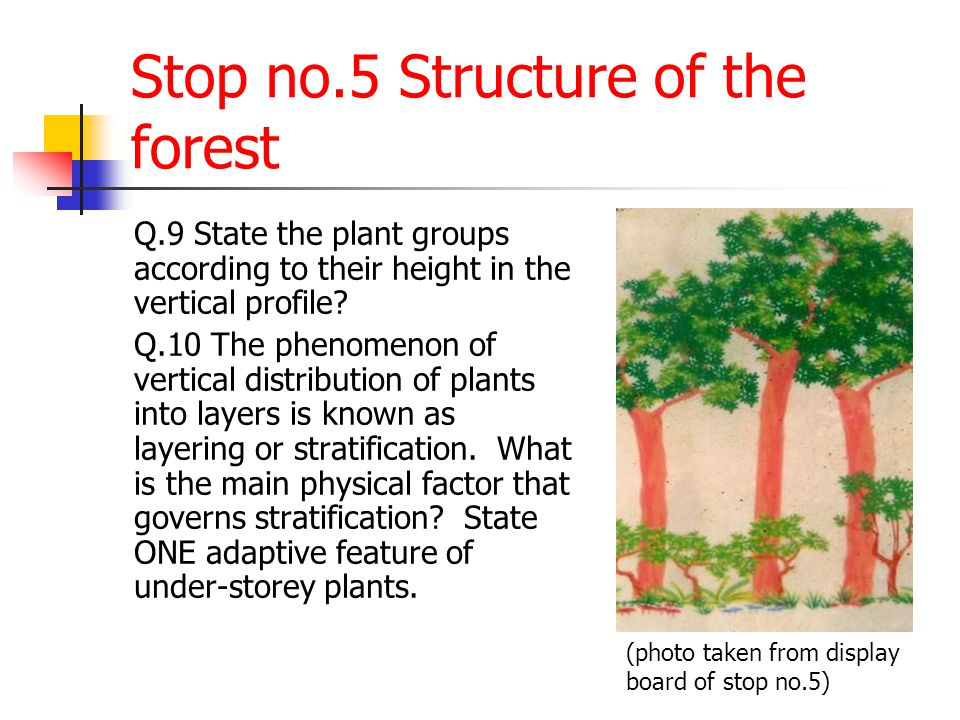 Stop no.5 Structure of the forest