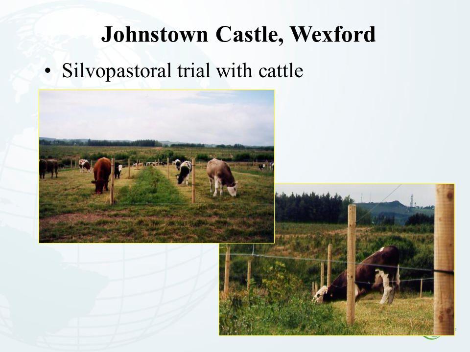 Johnstown Castle, Wexford