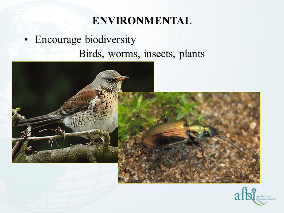 ENVIRONMENTAL Encourage biodiversity Birds, worms, insects, plants
