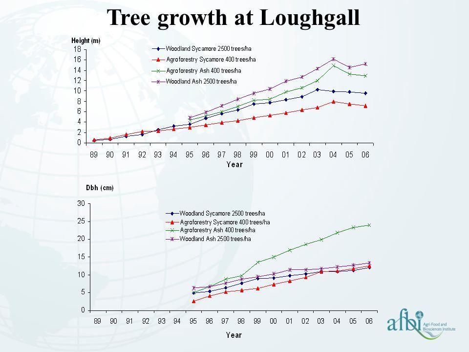 Tree growth at Loughgall