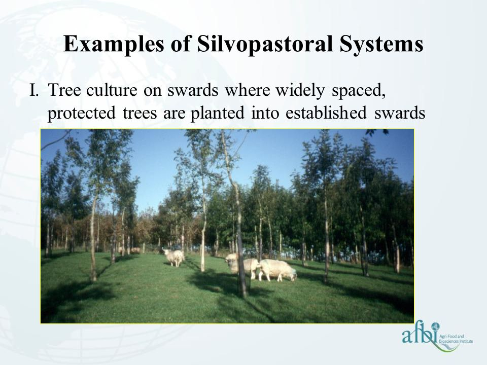 Examples of Silvopastoral Systems