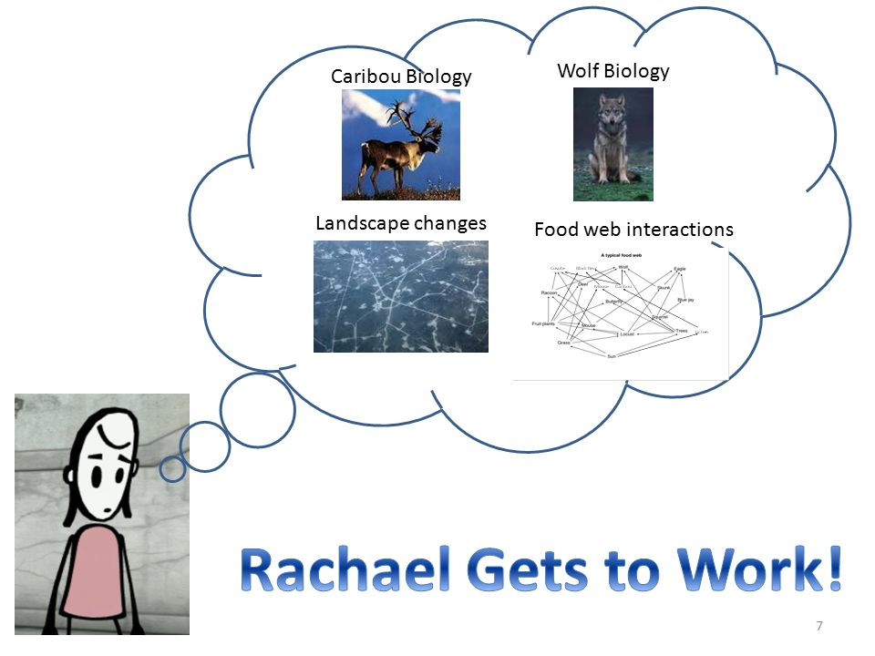 Rachael Gets to Work! Wolf Biology Caribou Biology Landscape changes