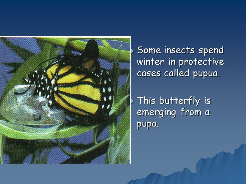 Some insects spend winter in protective cases called pupua.