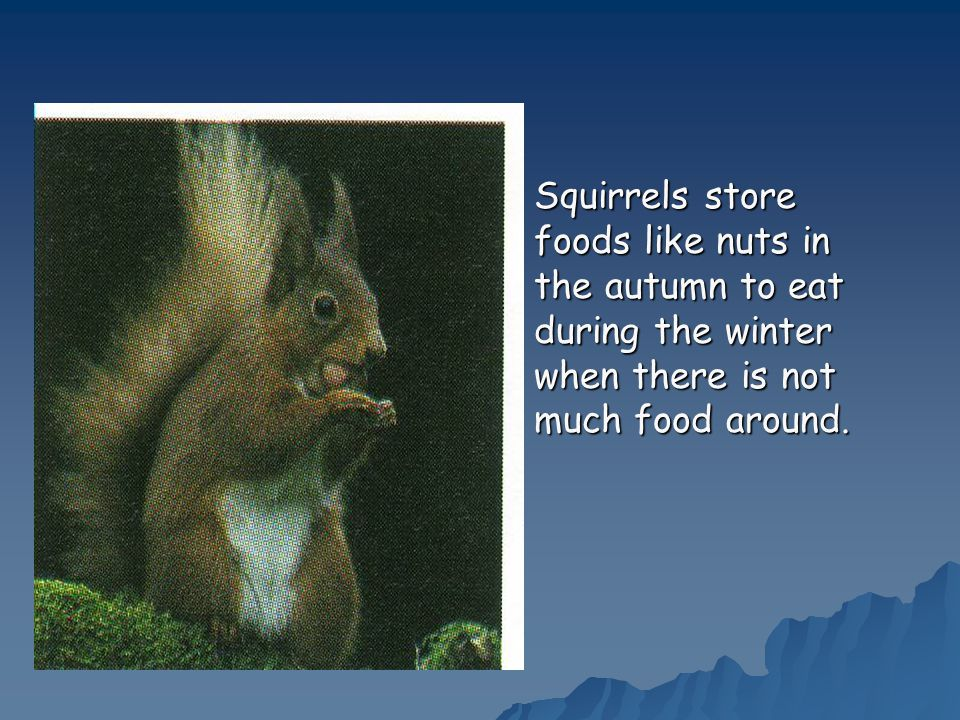 Squirrels store foods like nuts in the autumn to eat during the winter when there is not much food around.