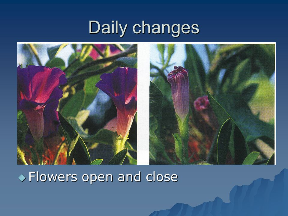 Daily changes Flowers open and close