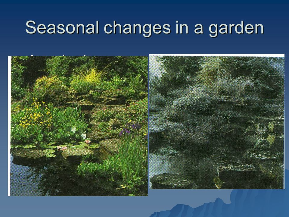 Seasonal changes in a garden