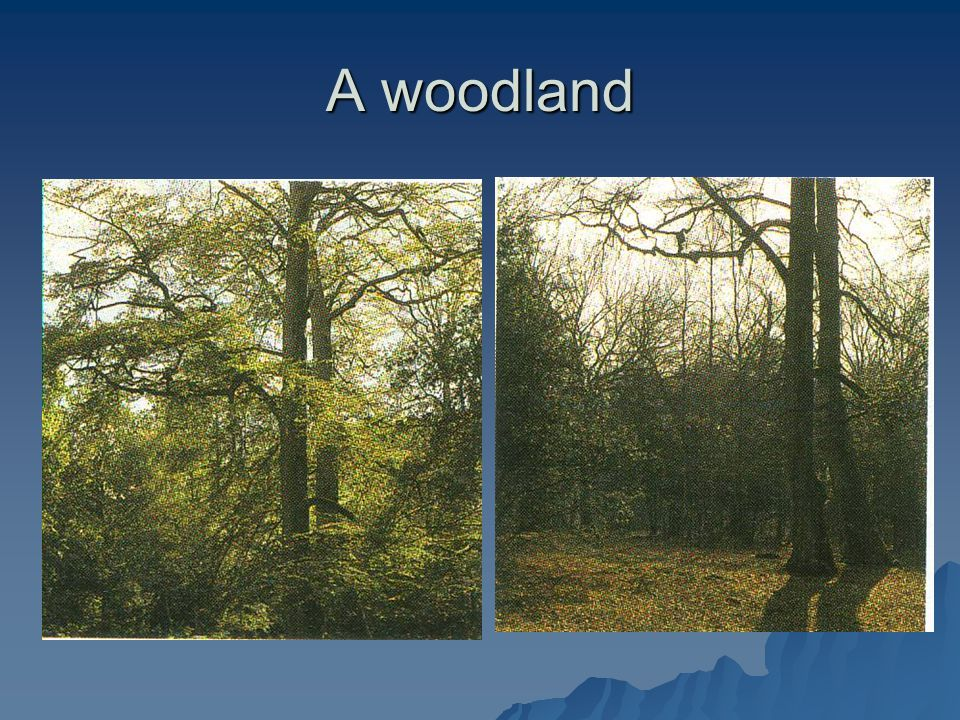 A woodland A woodland in spring