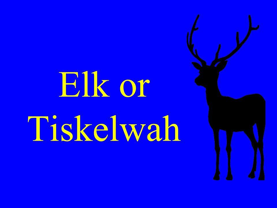 Elk or Tiskelwah