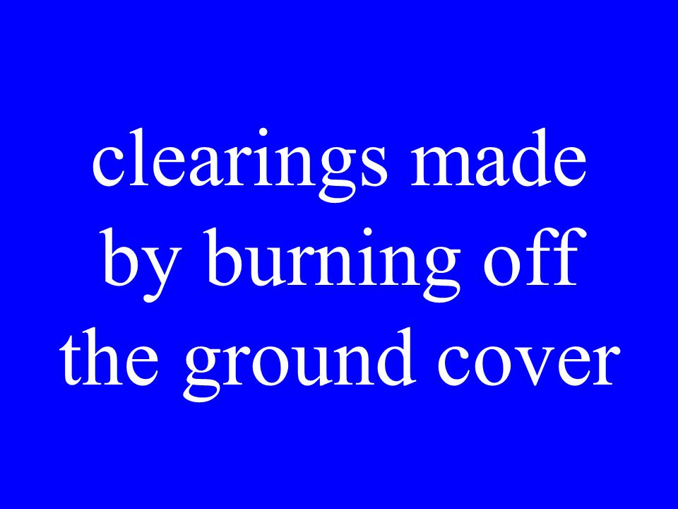 clearings made by burning off the ground cover