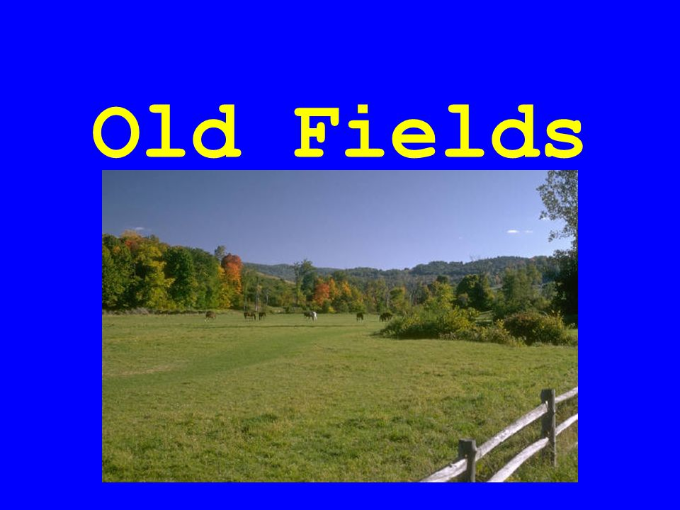 Old Fields