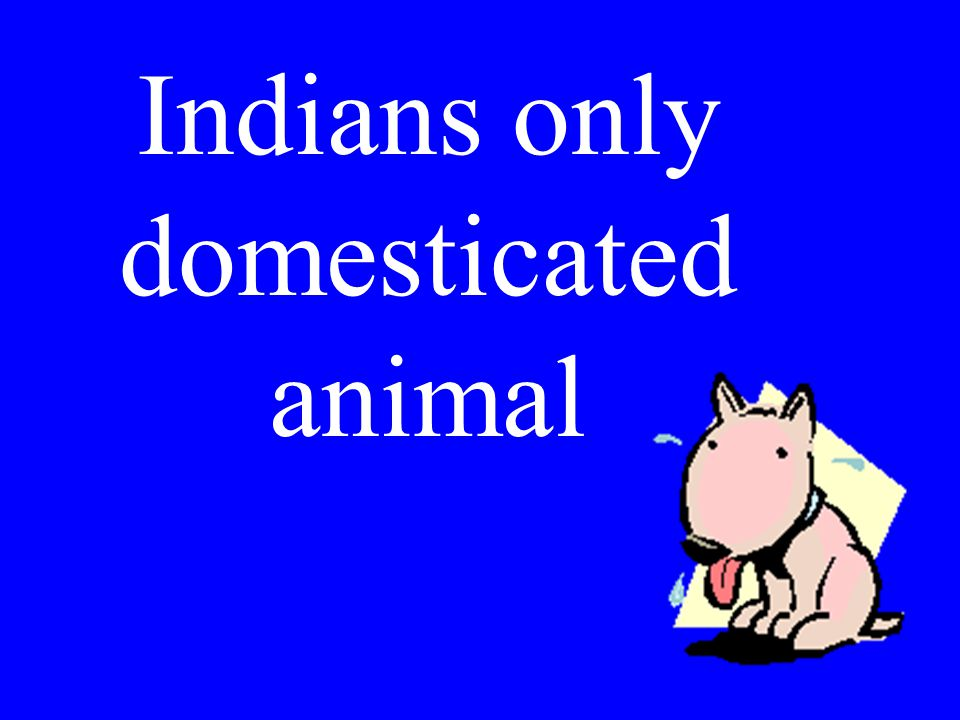 Indians only domesticated animal