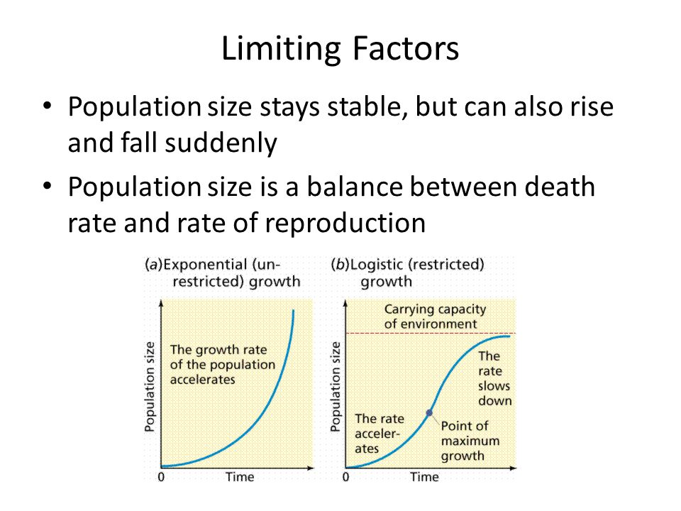 Limiting Factors Population size stays stable, but can also rise and fall suddenly.