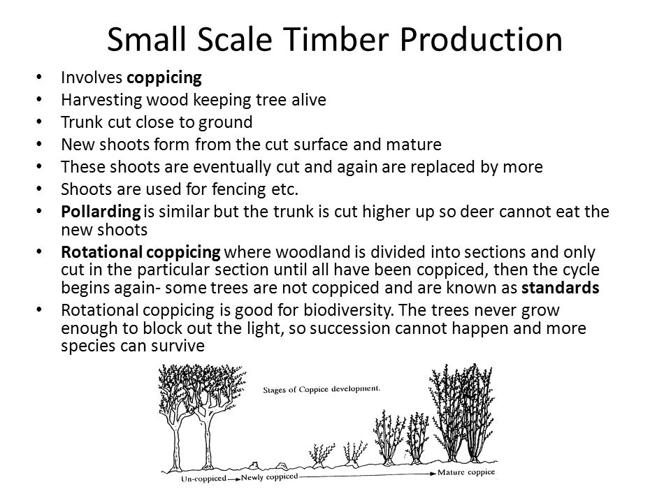 Small Scale Timber Production