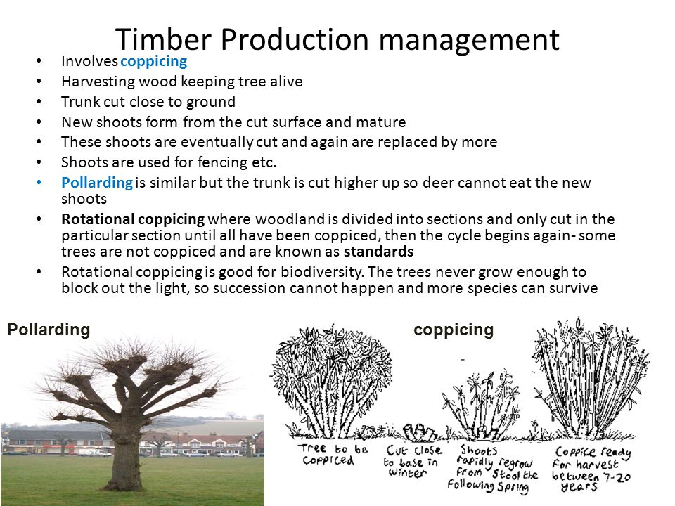 Timber Production management