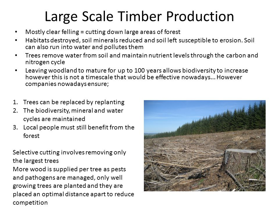 Large Scale Timber Production