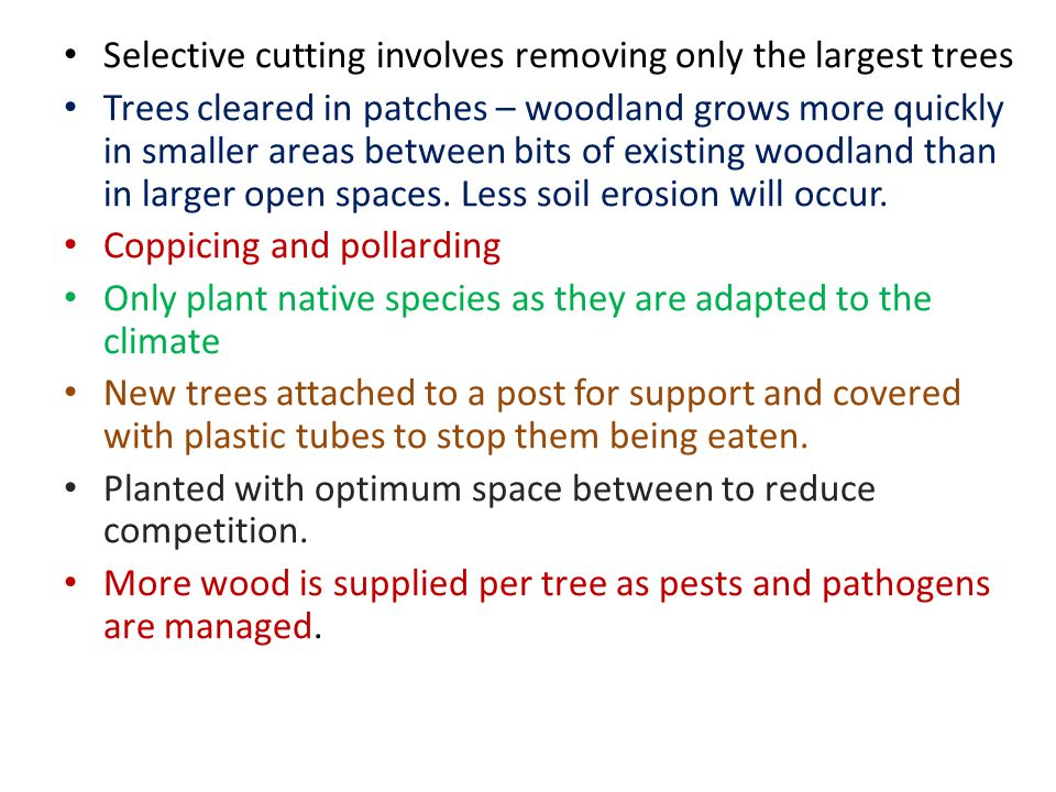 Selective cutting involves removing only the largest trees