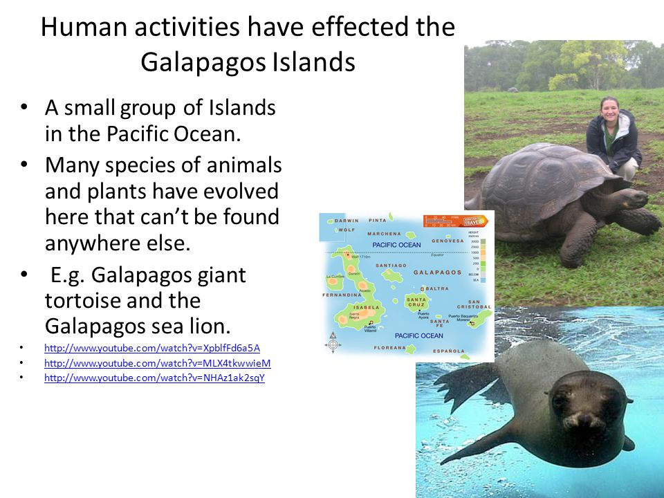 Human activities have effected the Galapagos Islands