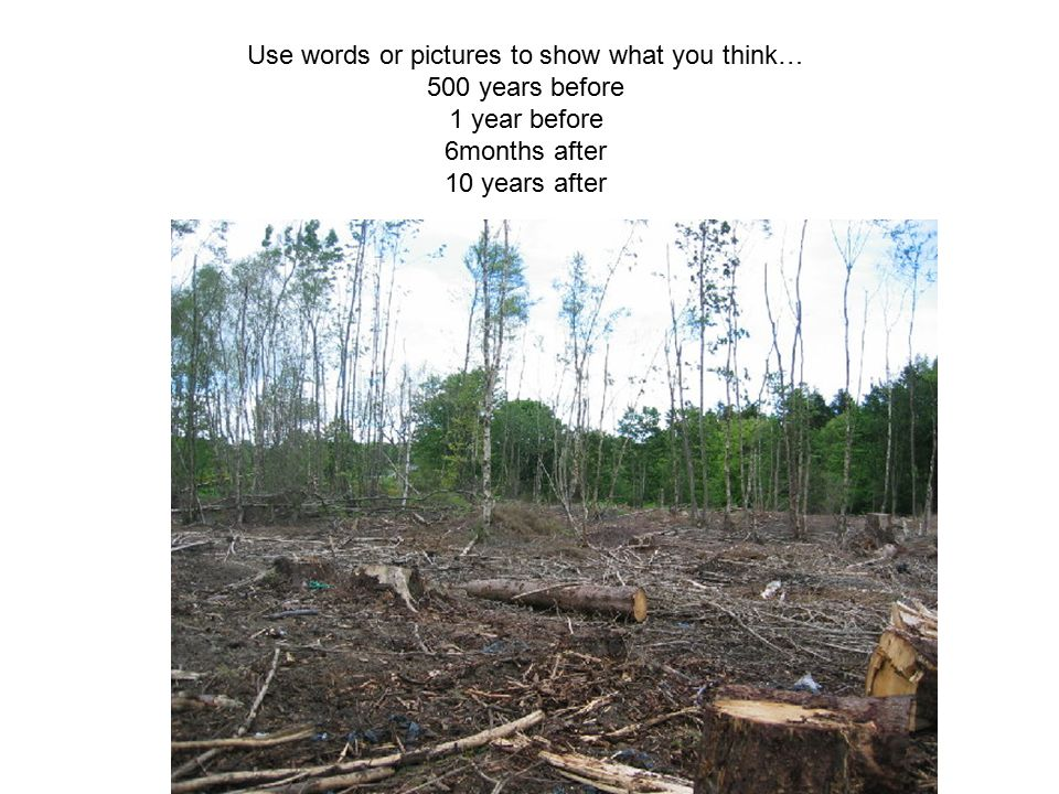 Use words or pictures to show what you think…