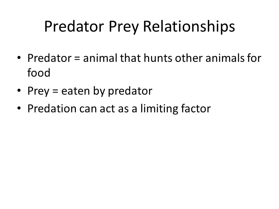 Predator Prey Relationships