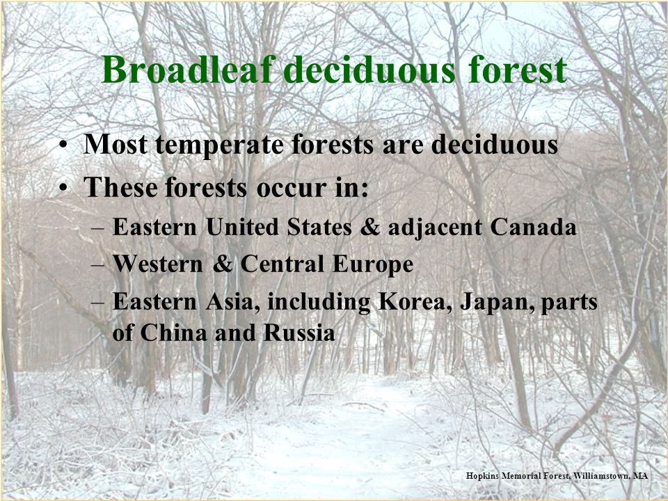 Broadleaf deciduous forest