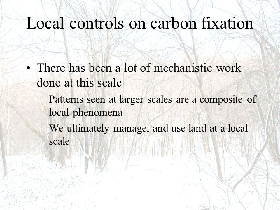 Local controls on carbon fixation