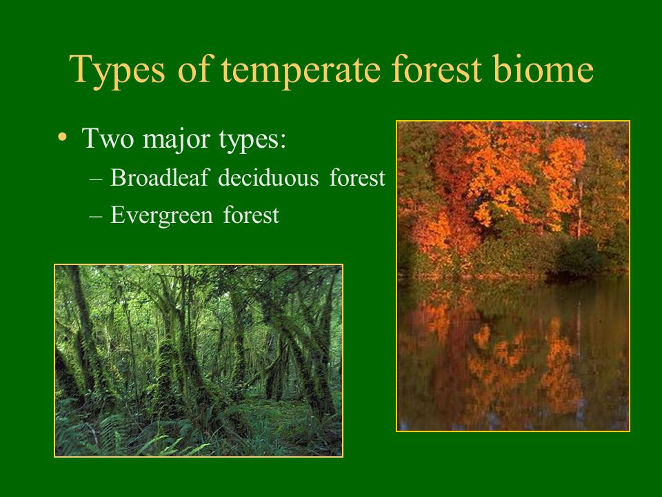 Types of temperate forest biome