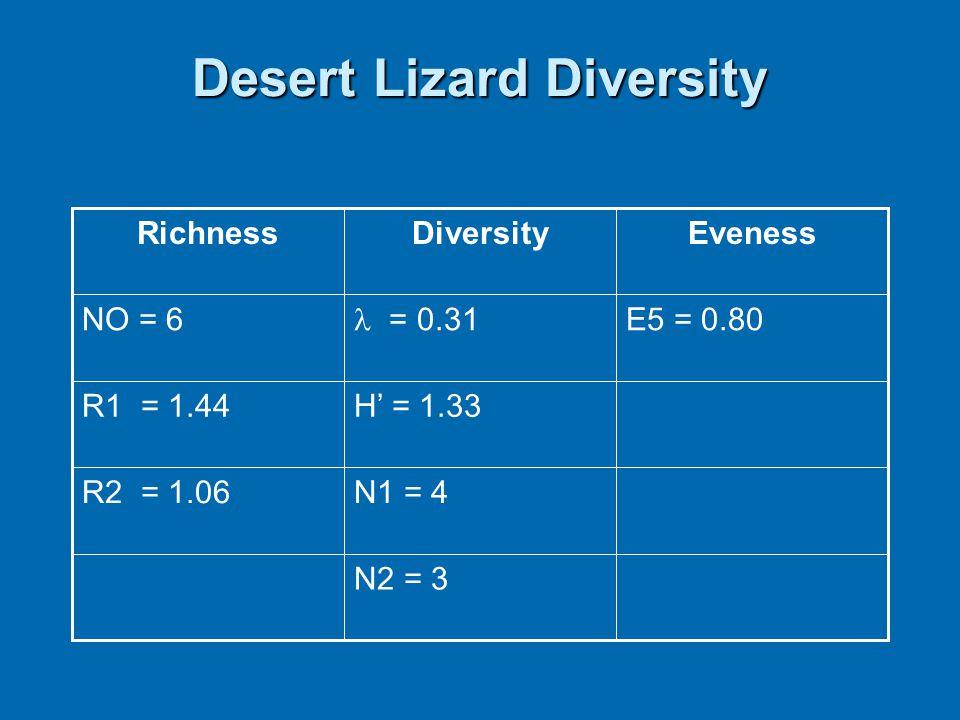 Desert Lizard Diversity