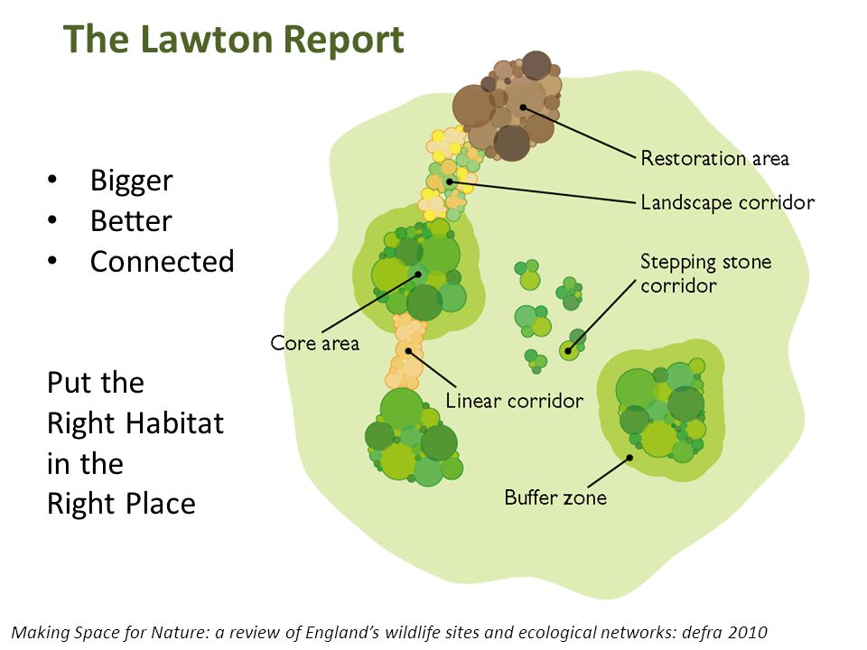 The Lawton Report Bigger Better Connected Put the Right Habitat in the