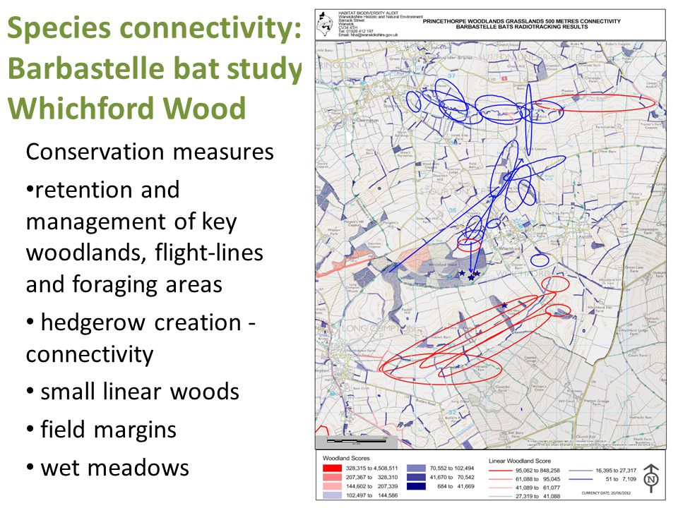 Species connectivity: Barbastelle bat study Whichford Wood