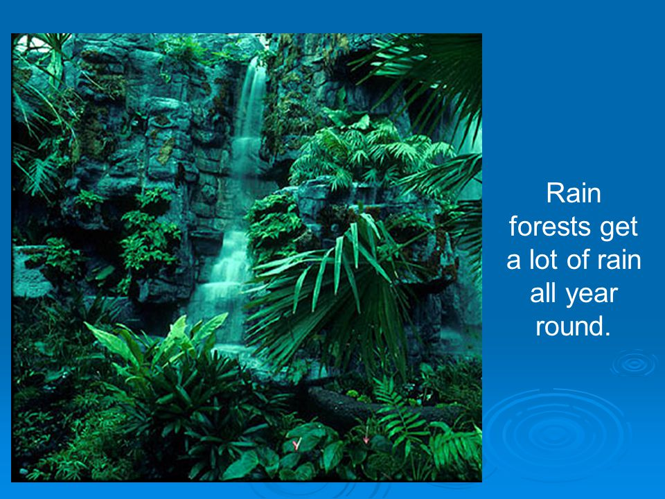 Rain forests get a lot of rain all year round.