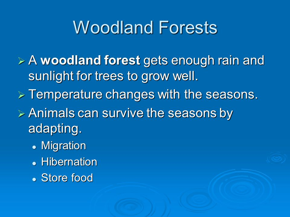 Woodland Forests A woodland forest gets enough rain and sunlight for trees to grow well. Temperature changes with the seasons.