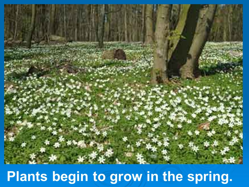 Plants begin to grow in the spring.