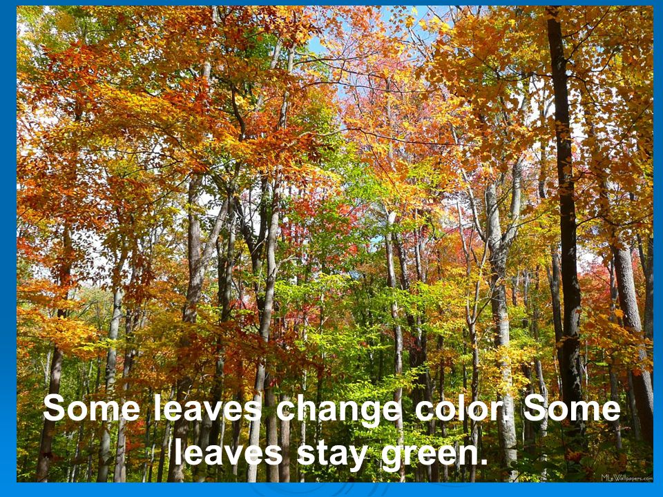 Some leaves change color. Some leaves stay green.